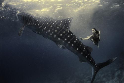 Xuống nước chụp hình cùng cá mập - 4