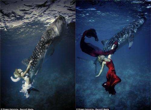 Xuống nước chụp hình cùng cá mập - 5
