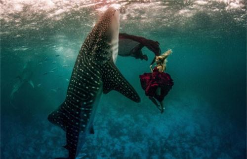 Xuống nước chụp hình cùng cá mập - 6