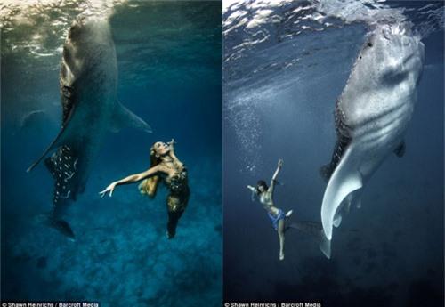 Xuống nước chụp hình cùng cá mập - 7