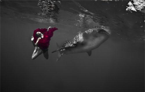 Xuống nước chụp hình cùng cá mập - 8
