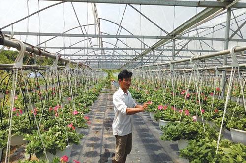 Nông nghiệp công nghệ cao được Đà Nẵng chú trọng