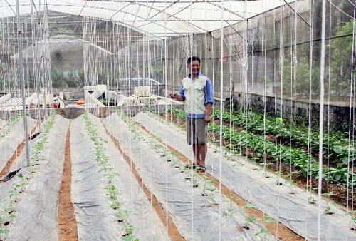 Mô hình trồng rau sạch giúp người dân thoát nghèo