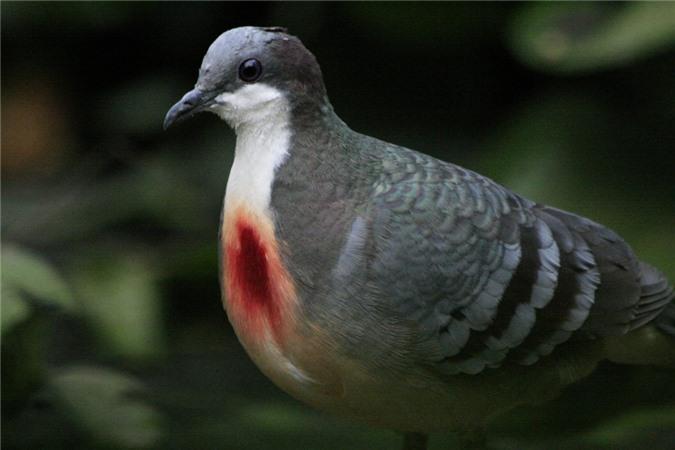 Nhung loai chim co ve ngoai la lung nhat the gioi-Hinh-2