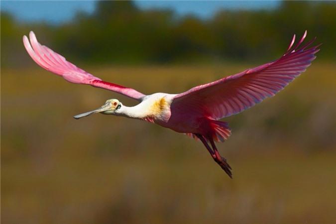 Nhung loai chim co ve ngoai la lung nhat the gioi-Hinh-4