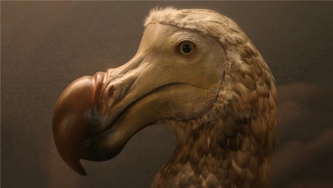 Nhung loai chim co ve ngoai la lung nhat the gioi-Hinh-6