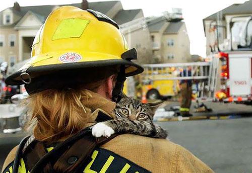 Những người lính cứu hoả đích thực là những anh hùng, không chỉ là đối với con người mà còn đối với cả các loài động vật.