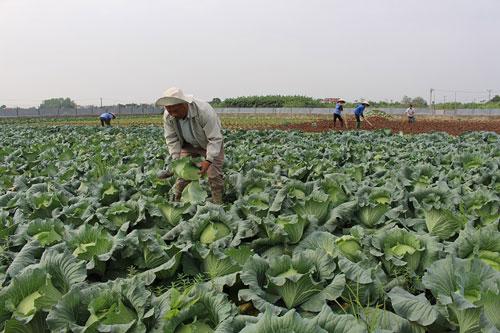 Anh Nghiêm Quang Vinh bên mô hình trồng rau hữu cơ của gia đình.