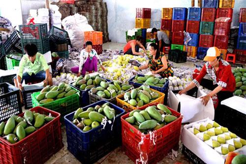 """""""Nút thắt"""" logistics khiến nông sản Việt hạn chế giá trị xuất khẩu"""
