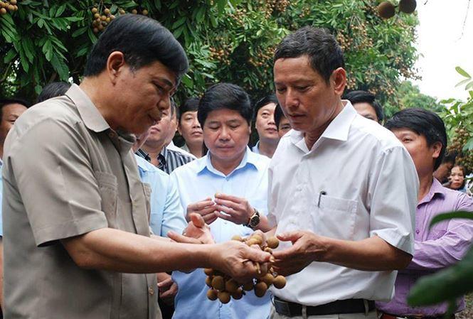 Bộ trưởng NN&PTNT Nguyễn Xuân Cường đề nghị Hưng Yên lên các kịch bản tiêu thụ nhãn đang đến vụ thu hoạch rộ.