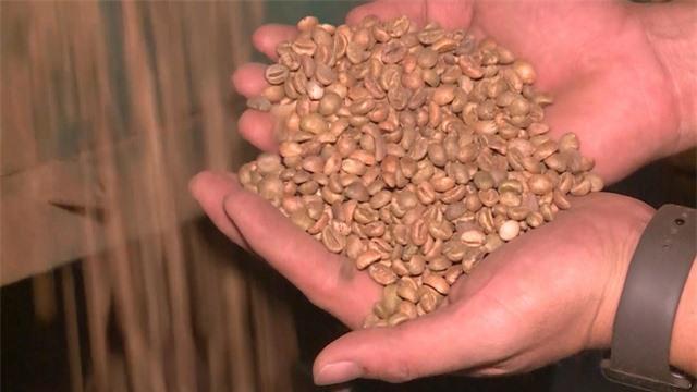 Giá cà phê có xu hướng tăng do lo ngại thiếu hụt nguồn cung - Ảnh 1.