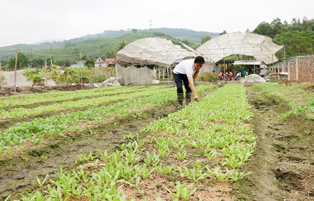 Các HTX trên địa bàn Uông Bí đang chú trọng sản xuất an toàn