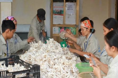 Sơn La: Phát triển HTX góp phần xóa đói giảm nghèo