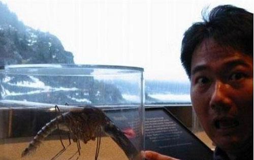 Con muỗi khổng lồ.