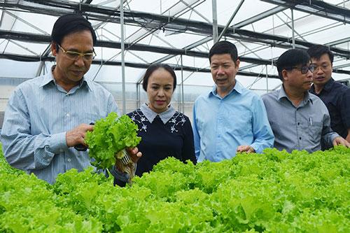Các HTX trên địa bàn tỉnh đang làm tốt công tác liên kết phát triển sản xuất nông nghiệp an toàn