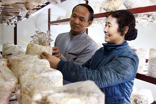 Nấm đang là sản phẩm thế mạnh tại nhiều địa phương của tỉnh Bắc Giang