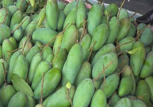 Mỗi năm, gia đình chị Đặng Thị Thu Hằng thu về gần 200 triệu đồng từ trồng cây ăn quả.