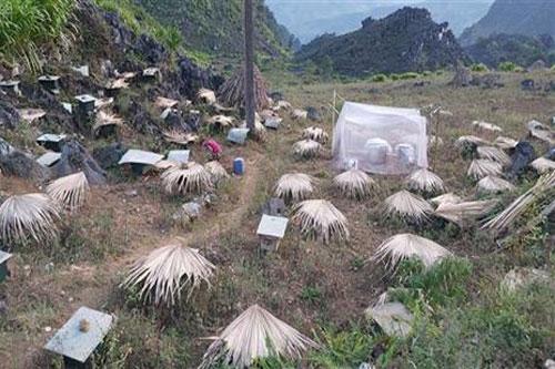 Hà Giang: Làm giàu từ nuôi ong bạc hà