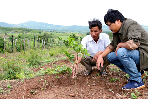 Giống cây cam CS1 được trồng tại thôn Phú Bình (xã Ia Le).