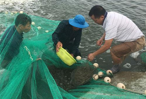 Đánh giá dự án nuôi tôm sú tại Quảng Ninh.