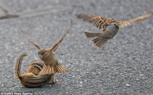 Kich tinh xem chim se ngan can cap soc chuot hon chien-Hinh-6