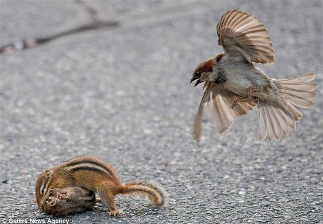 Kich tinh xem chim se ngan can cap soc chuot hon chien-Hinh-7