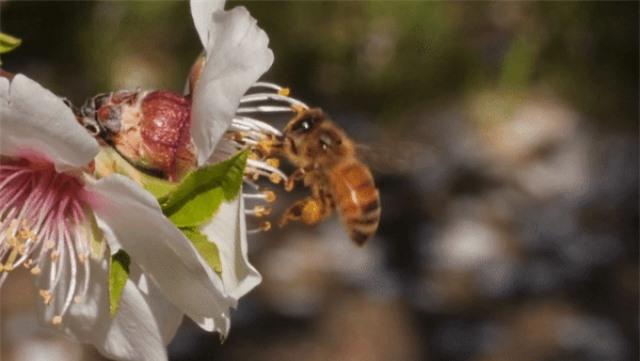 Từ những bông hoa, ong không chỉ tạo ra mật mà còn có cả… bánh mì - 2