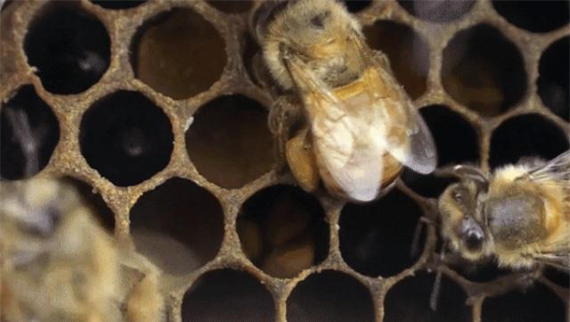 Từ những bông hoa, ong không chỉ tạo ra mật mà còn có cả… bánh mì - 3