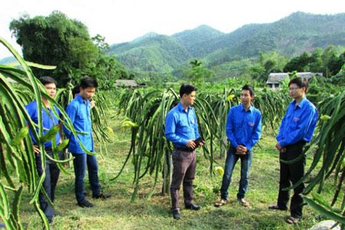 Nhờ chú trọng phát triển HTX nên nhiều địa phương của Hà Giang đã xây dựng thành công NTM (Ảnh: Internet)