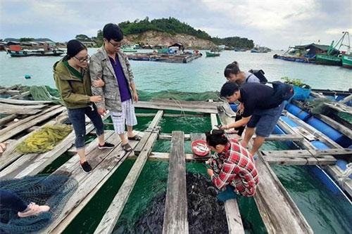 Mô hình nuôi cá lồng tại Tiên Hải đang cho thấy tiềm năng lớn