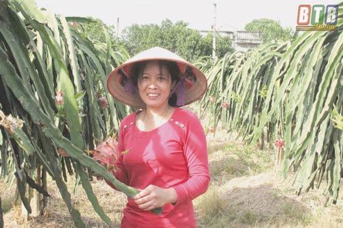 Vườn thanh long ruột đỏ của gia đình anh Tuyến cho thu hoạch trung bình mỗi năm khoảng trên 40 tấn.