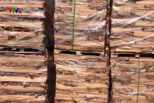 Lô hàng gỗ bị bắt giữ.