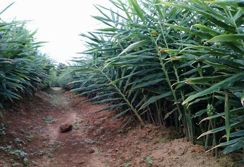 Cao Bằng chú trọng nâng cao chất lượng nông sản