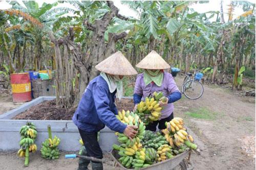 Bắc Ninh: Nông thôn mới về đích sớm