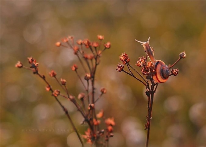 Chim dam trong the gioi nhu co tich cua oc sen-Hinh-4