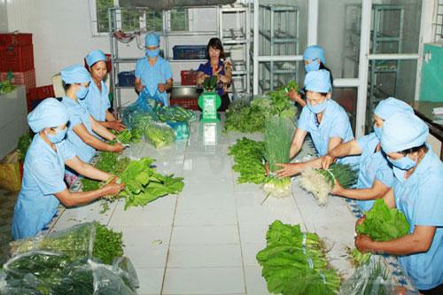 Phân loại và gắn tem truy xuất nguồn gốc rau củ tại HTX Đa Mai