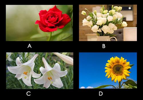 Bạn chọn loại hoa nào?