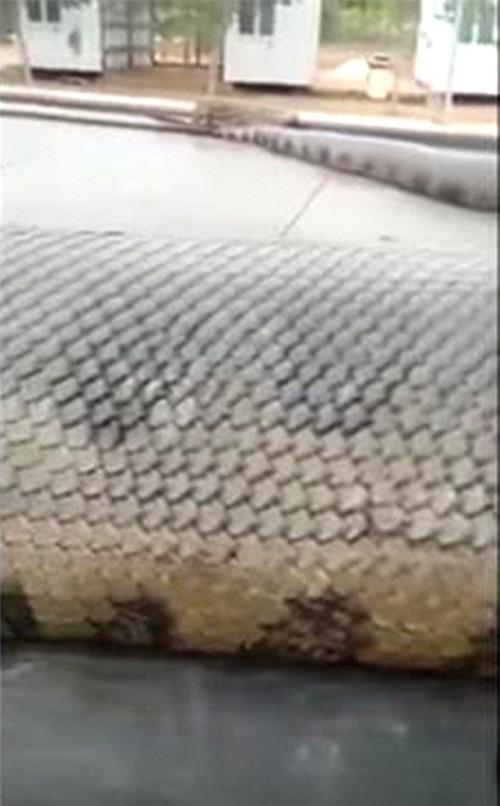 Kinh hoang tran thanh tinh dai gan 10m xuat hien-Hinh-4