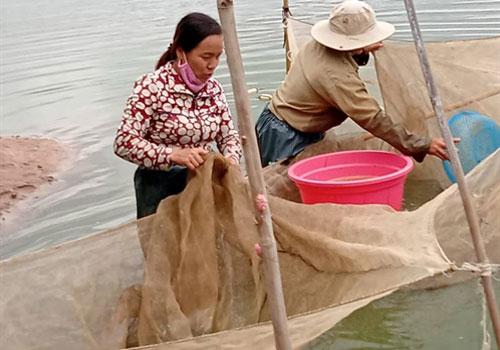 Gia Lai: Hợp tác xã cá giống tiêu biểu vùng Tây Nguyên