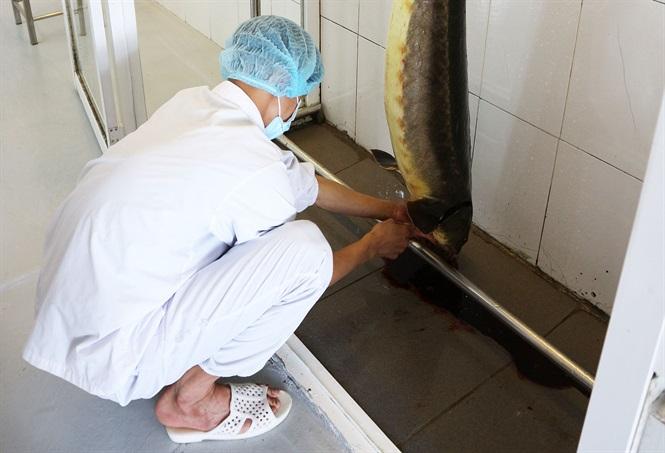 Ngành cá nước lạnh Lâm Đồng hướng đến phát triển quy mô lớn, chất lượng cao.
