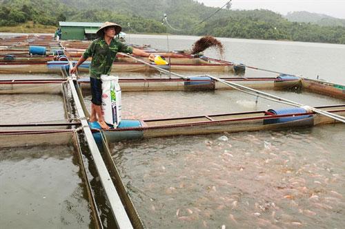 Những năm gần đây, nhiều gia đình ở huyện Cát Tiên, Lâm Đồng trở nên giàu có nhờ nghề nuôi cá.