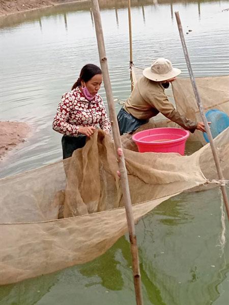 Nghề nuôi cá giống đang giúp nhiều hộ dân ở huyện Phú Thiện giàu lên.