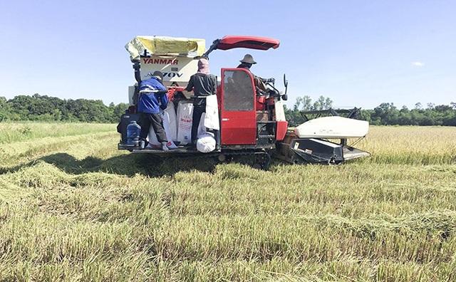 Nhờ sản xuất sạch, nông nghiệp của huyện đang cho hiệu quả tích cực