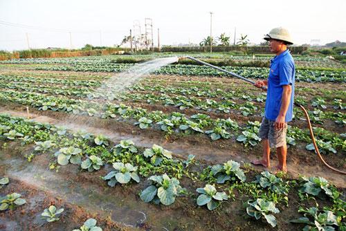 Phong Điền đang chú trọng phát triển nông nghiệp sạch