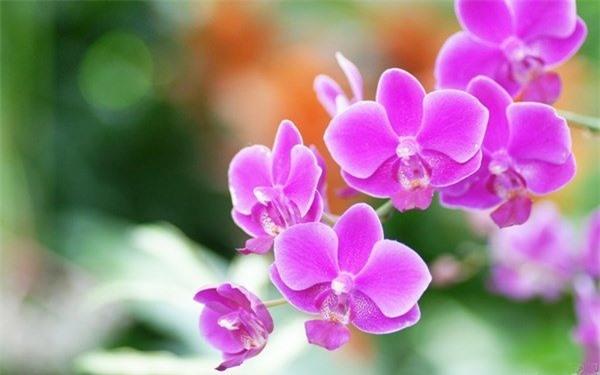 Những loại hoa đánh thức tài lộc, sáng đặt bàn thờ Thần Tài chiều gặp may