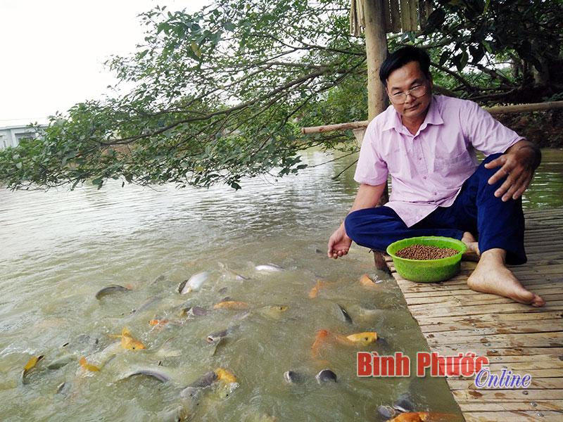 Gia đình anh Lê Văn Trung thu lời cao từ nuôi cá nhiều tầng nước trong ao. Đàn cá rất dạn người, thò tay xuống đàn cá không sợ mà vẫn tranh nhau đớp mồi khiến ai tới thăm quan đều rất thích thú.