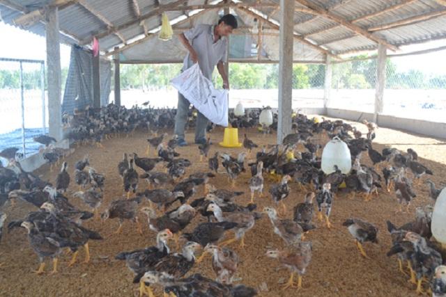Chăn nuôi an toàn cũng được huyện chú trọng