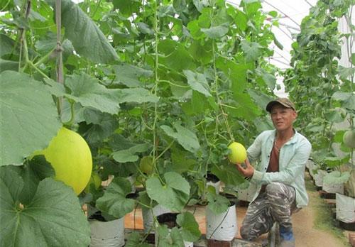 Ngọc Lặc đang dành nhiều nguồn lực đầu tư xây dựng các mô hình trồng trọt an toàn