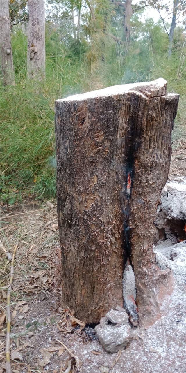 Liên tiếp phát hiện lâm tặc phá rừng tại Vườn quốc gia Yok Đôn - 2