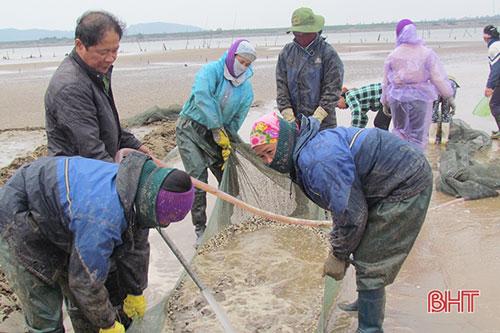 Ông Nguyễn Văn Việt cùng công nhân thu hoạch ngao